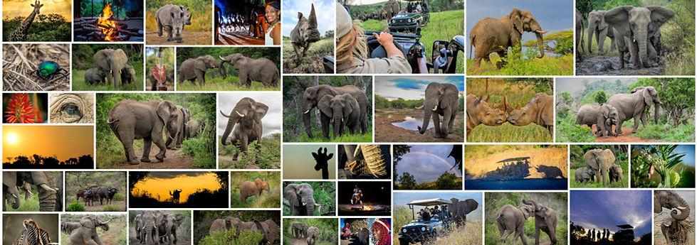 Kim Mcleod Photography | Hoedspruit, South Africa | Safari Photography
