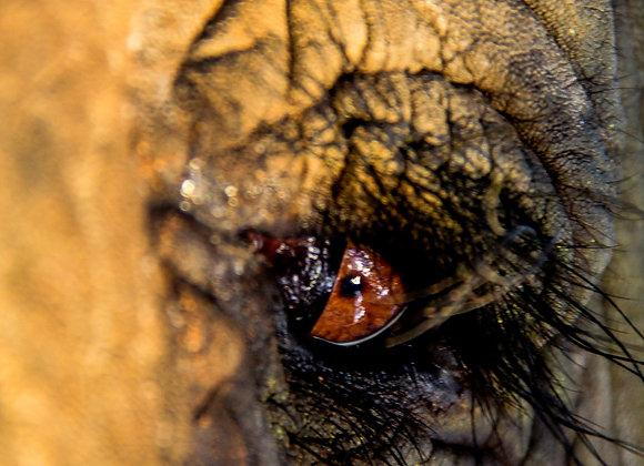 The Eye of Medwa
