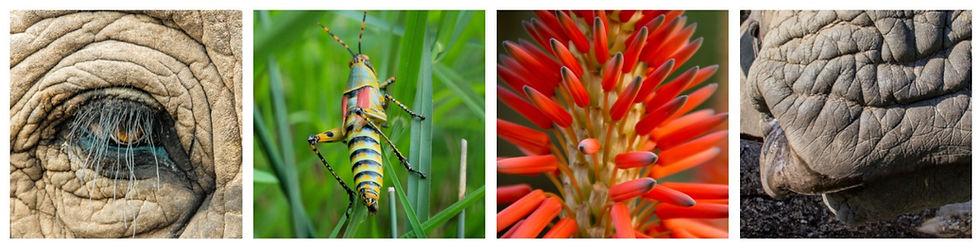 Kim Mcleod Photography | Hoedspruit, South Africa | Photography