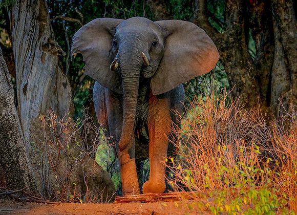 Elephant of Botswana Koro Rover & Island Camp II