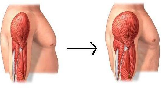 Hormona del crecimiento humano (HGH)
