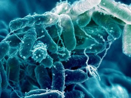 Biocelulosa y su gran variedad de usos