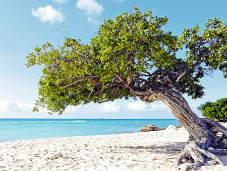 7 Reasons to Travel to Aruba