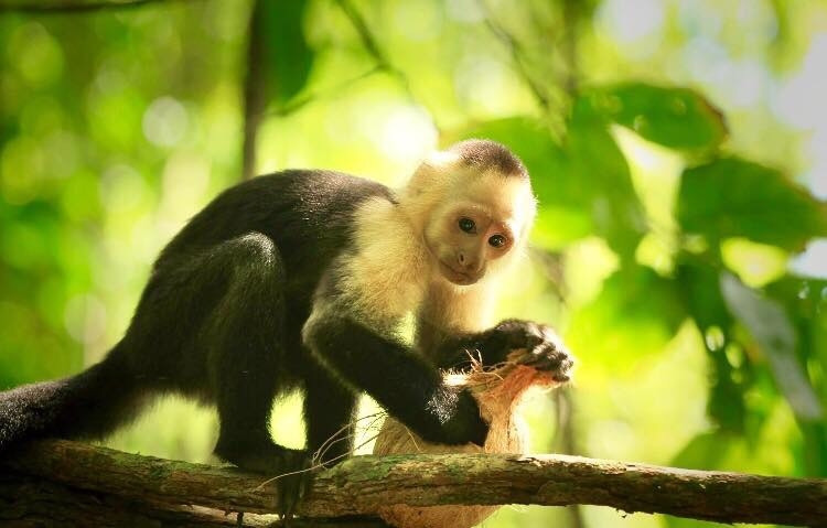 Monkey Costa Rica EverAfter Travel Agency