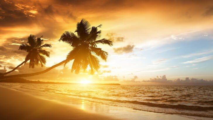 Palm Trees Sunset Beach Ocean EverAfter Travel Agency