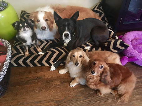Pet Sitting, Dog Walking, Dog Boarding, Dog Daycare in the Twin Cities