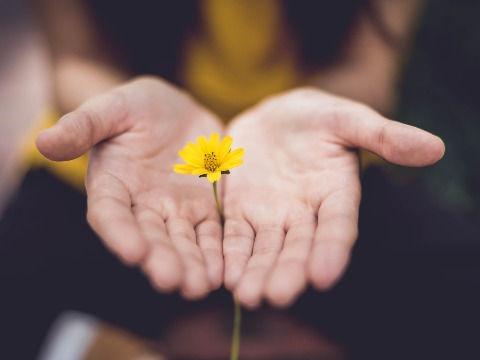 Hands Offering a Flower