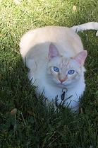 Gandy in the grass.JPG
