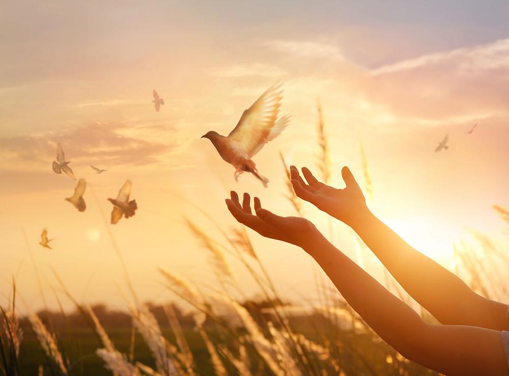 Hands Releasing a Bird