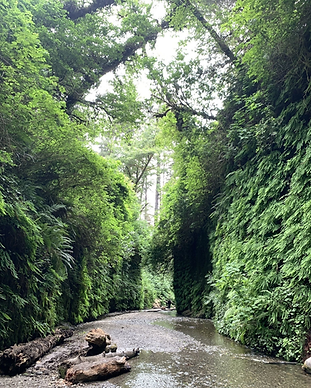 Fern Canyon Loop Trail.png