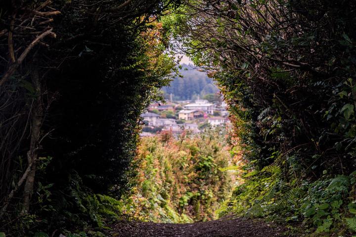 Trinidad Head Trail