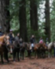 Redwood Creek Buckarettes Horseback Ridi
