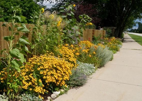 community_garden_Shawna_Coronado