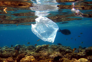 A plastic bag in the ocean causing pollution