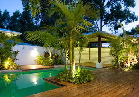 The 7 Best Palm Trees for Landscaping in Hawaii