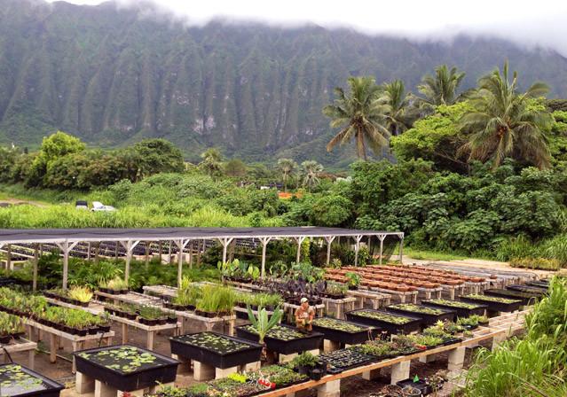 Geobunga Waimanalo