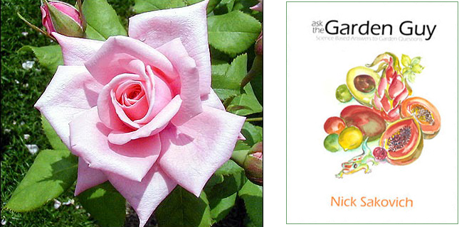 gardenguy
