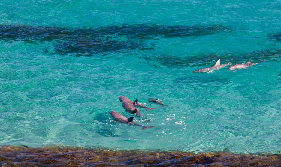 Marine Life Kangaroo Beach