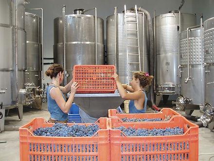 יין טבעוני ביקב ססלוב