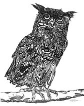 OWL_2.jpg