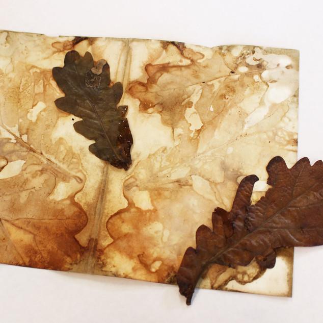 oak leaves2.jpg