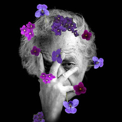 ...llenar el mundo de violetas