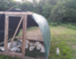 chicken tractor_edited.jpg