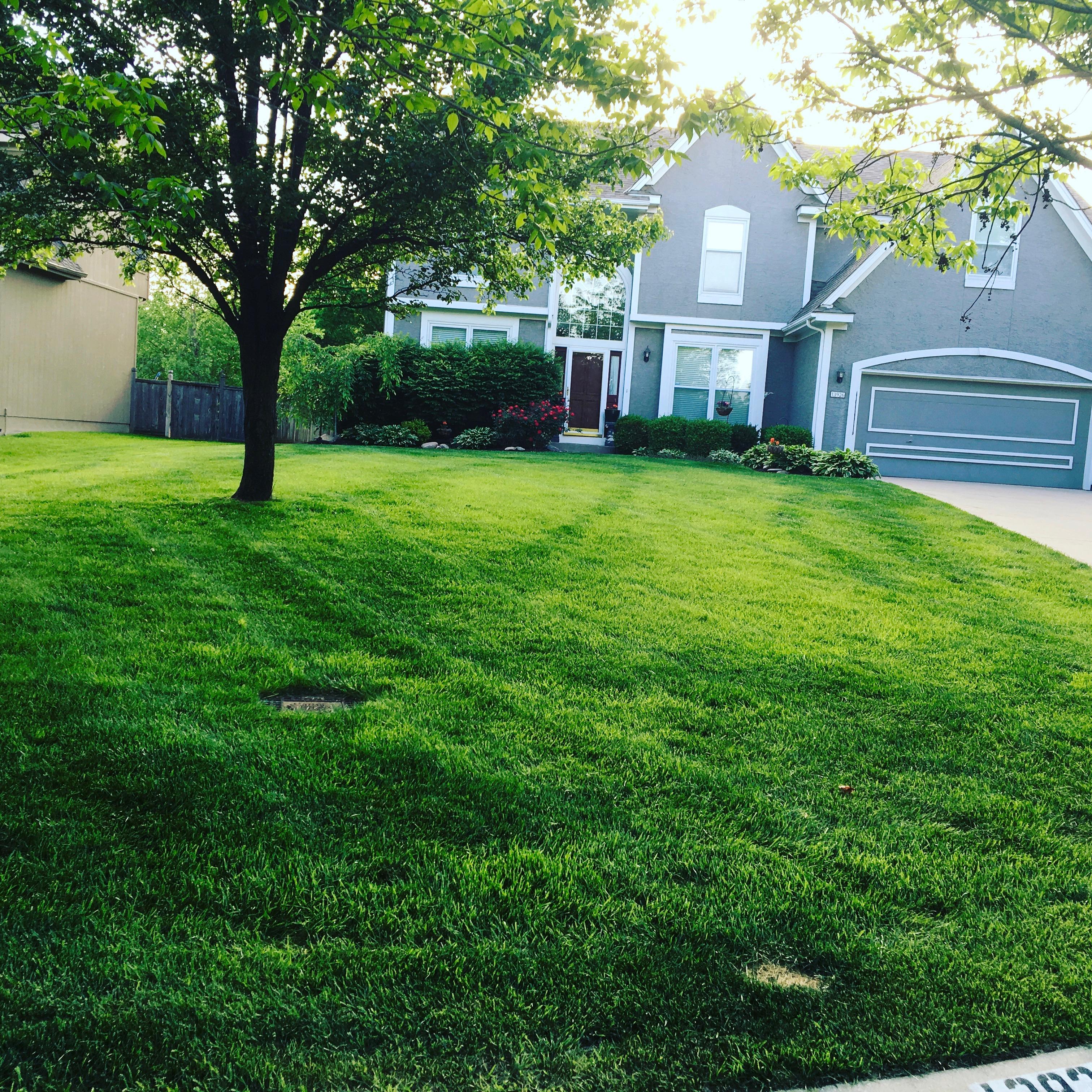 Home | Dr  D Lawn Care, LLC