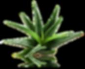 Nilo Aloe vera Juice jugo de savil