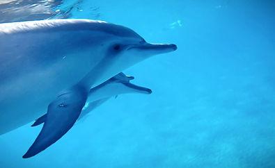dolphins_edited_edited.jpg