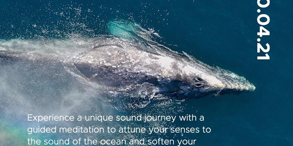 Sounds of the Ocean - 04/20/21 @ Zunya