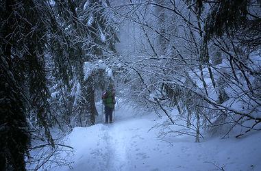 Bayrischer Wald - 02 - 001...jpg