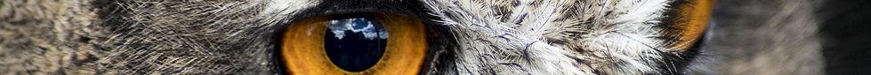 training gestalt Kirsteen Greenholm wise owl eyes looking forwards