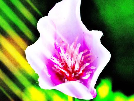 Lekcja wdzięczności, czyli nowicjuszka dziękuje za niechciane rzeczy