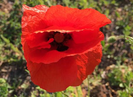 Lekcja urody, czyli nowicjuszka w duchowym SPA