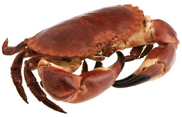 318. Crabe (tourteau) vivant de +/- 600gr