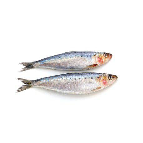 374. Sardines entières pêchées dans la Mer d'Irlande - 12,50€/kg