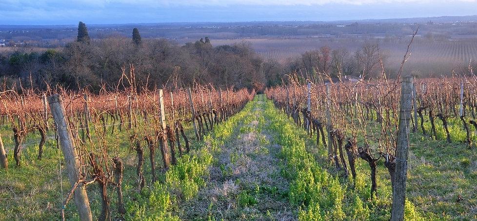 Côtes de Bordeaux Saint Macaire