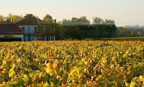 Château Anthonic, Moulis, Médoc, châteaux, wine, French wines, France, cru