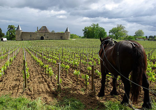 Pessac Léognan, Graves, château, châteaux, wine, French wines, France, vineyard cru