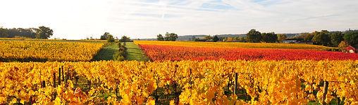 Saint Foy Sainte Foy Côtes de Bordeaux chateau des chapela wine vin France