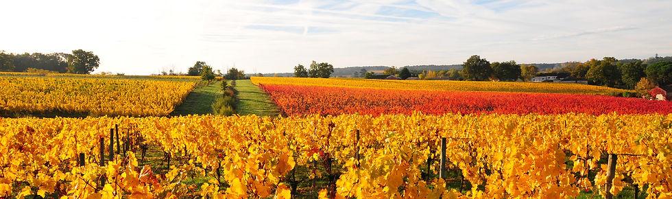 Sainte Foy Côtes de Bordeaux