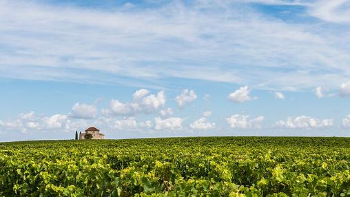 Saint Estèphe vineyard under a blue sky, Médoc, château, châteaux, wine, wines