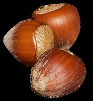 purepng.com-hazelnutfruitsnuthazelnuthaz