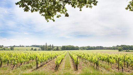 Côtes de Francs, cru Godard, Saint-Émilion, château, châteaux, wine, wines