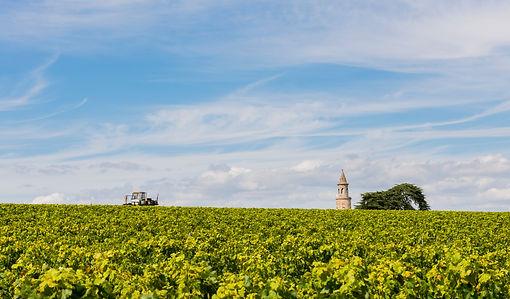 Médoc vineyard under a blue sky,, château, châteaux, wine, wines