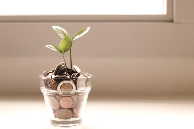 נבט שצומח בעזרת גיוס כספים ממשקיעים