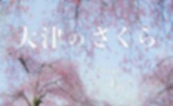 2019.03 さくら3.jpg