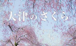 055-2019.03 さくら.jpg