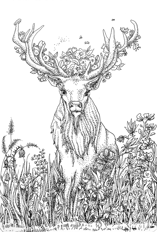 Floral Deer/Preparation Drawing I